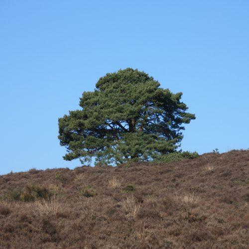 green tree at posbank